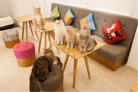 catcafe01